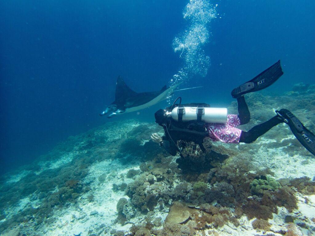 Pengunjung berenang bersama ikan pari di manta point labuan bajo