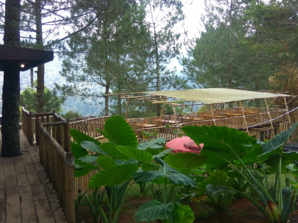 Kafe Unik di Tengah Hutan
