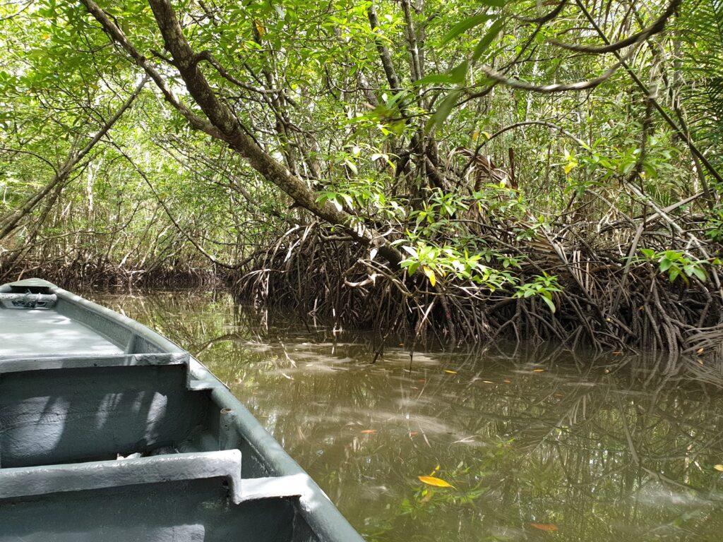 menaiki perahu menyusuri hutan mangrove Pulau Bintan