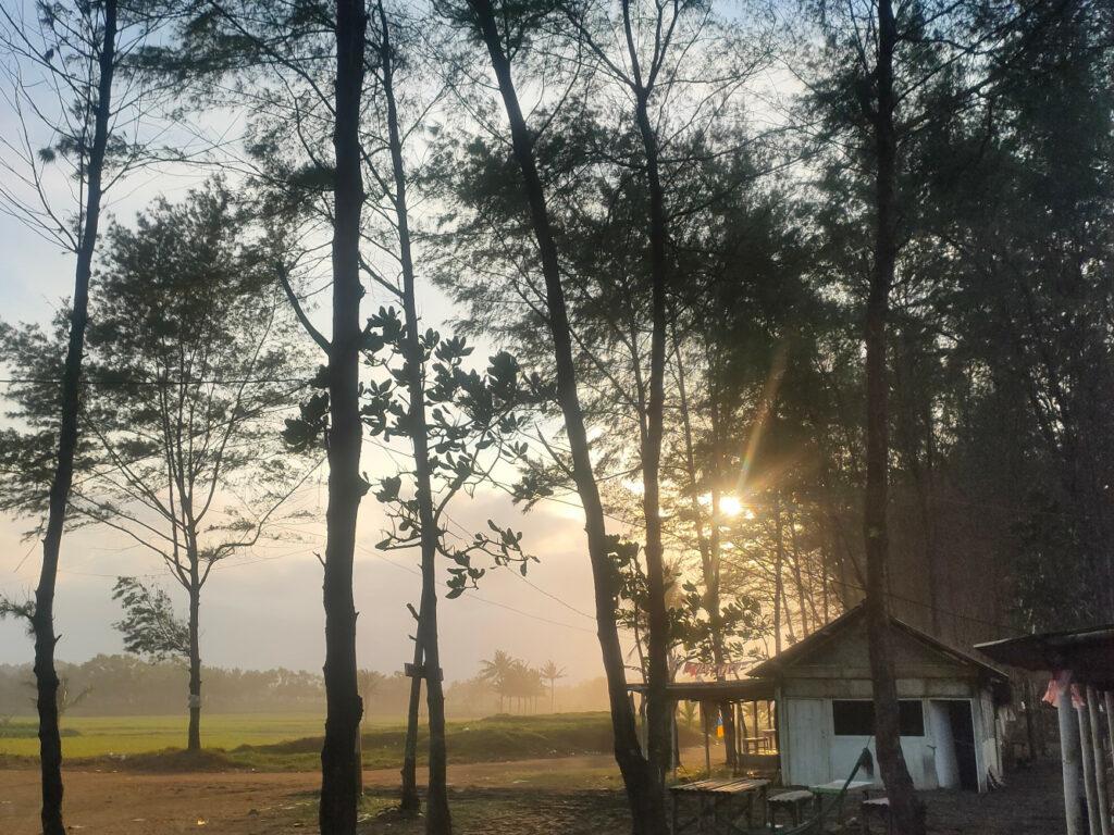 Deretan Pohon Cemara Di Pantai Sodong