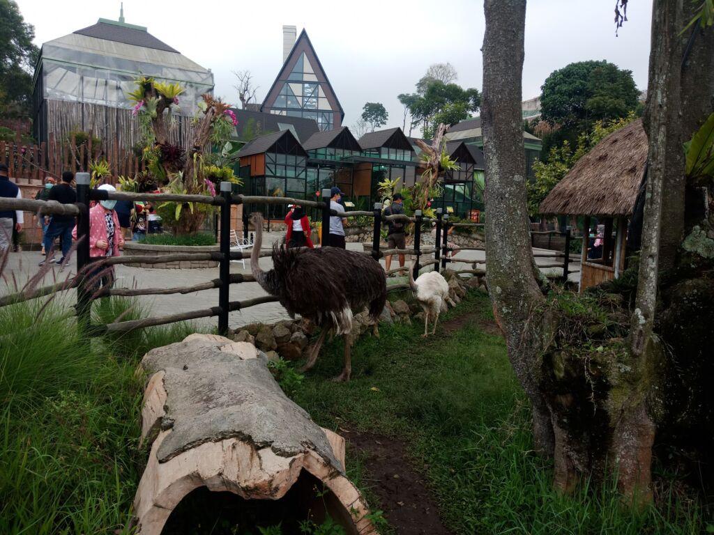 Wisatawan sedang Menyaksikan Hewan