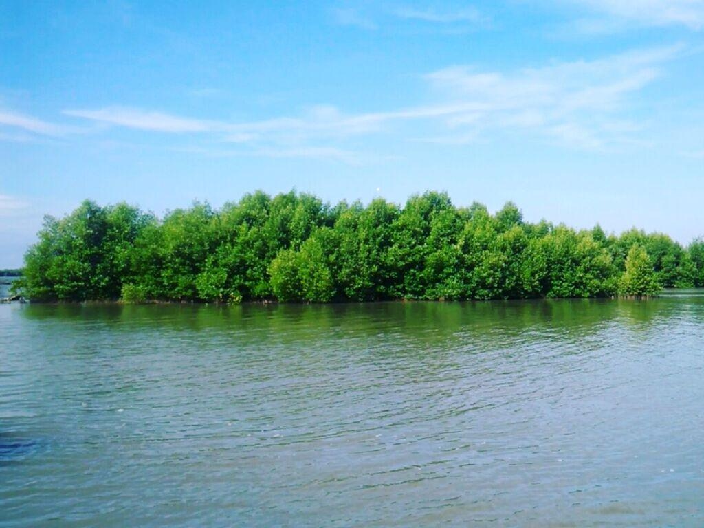 area hutan mangrove di sekitar pantai muara gembong