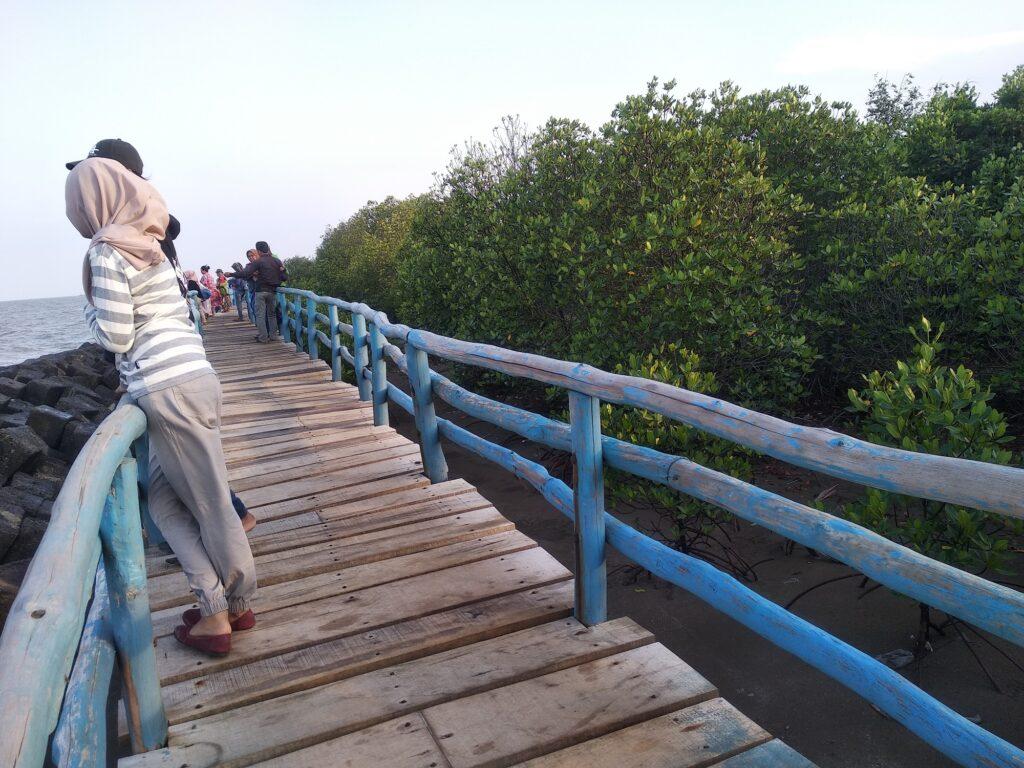 ekowisata mangrove di Pantai Rembat