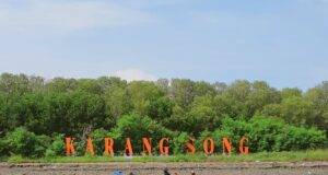 area hutan mangrove di sekitar pantai karangsong