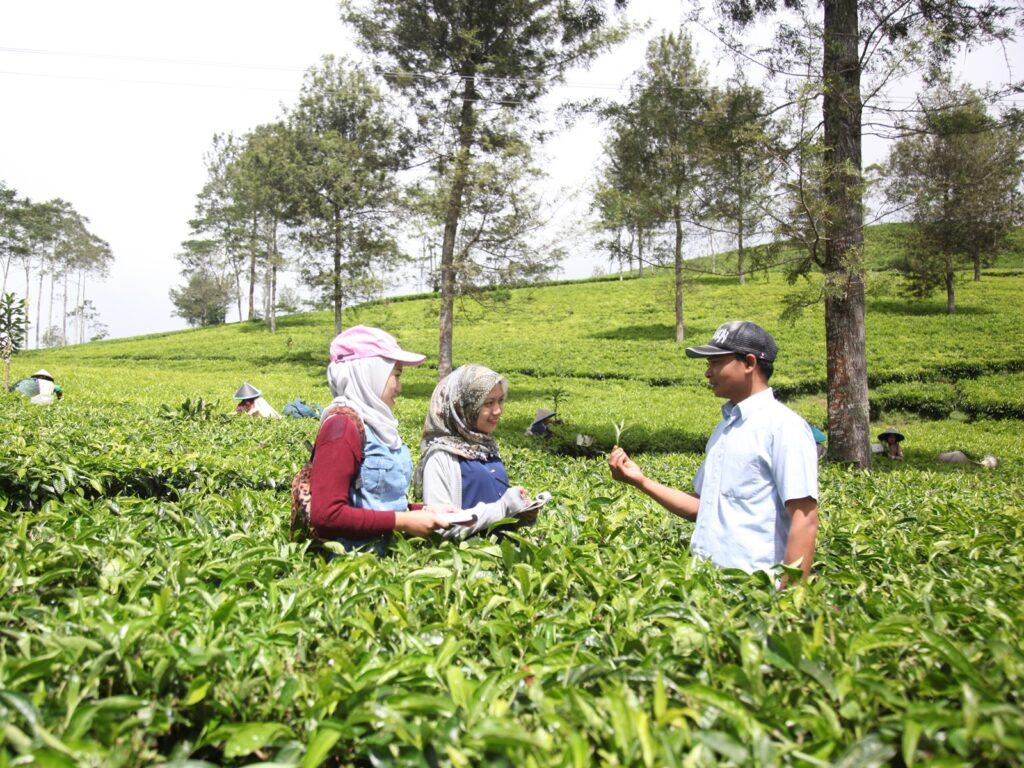 petugas memberi penjelasan seputar teh Kaligua pada pengunjung