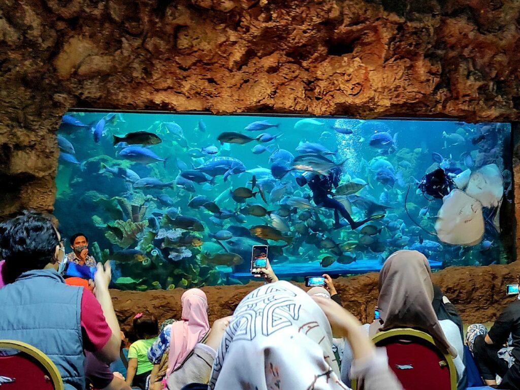 penyelam memberi makan ikan dalam akuarium