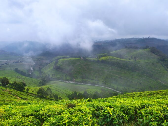 suasana saat kabut mulai turun di kawasan Kaligua