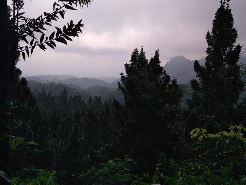 suasana hutan di sepanjang jalan trekking
