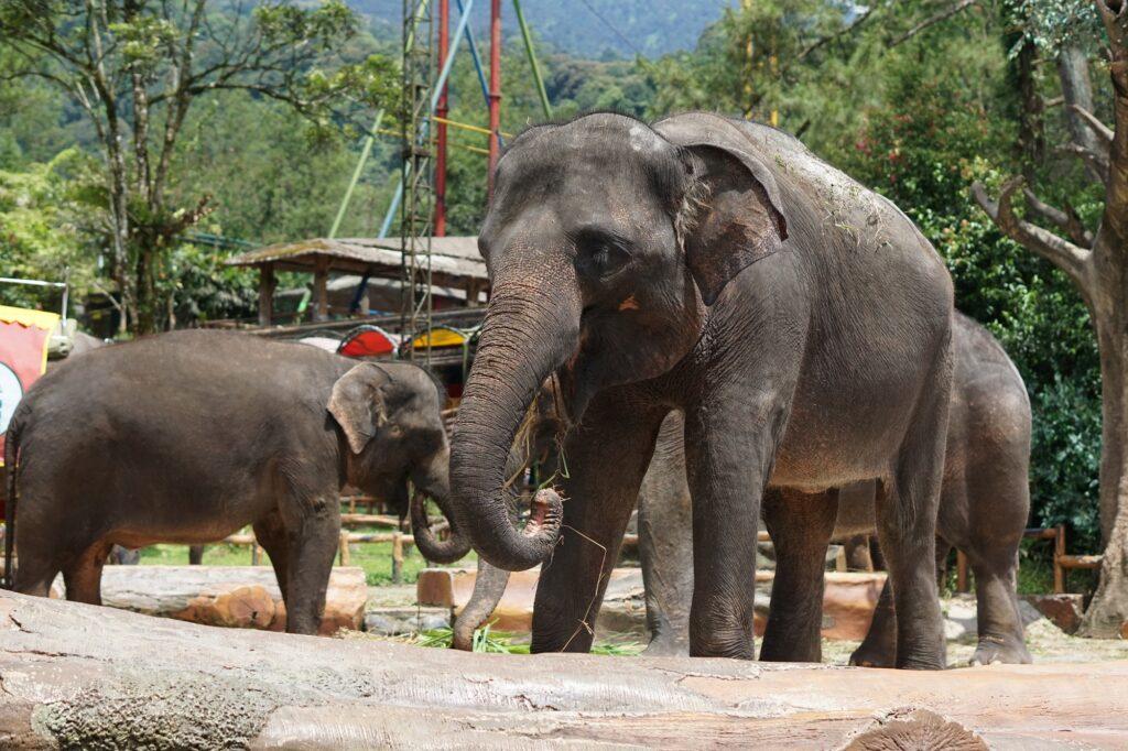 Taman Safari Indonesia Tempat wisata di Bogor yang paling populer di sini salah satunya bisa melihat Gajah