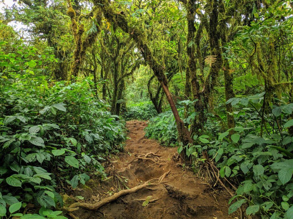 Hutan lebat mendominasi jalur pendakian