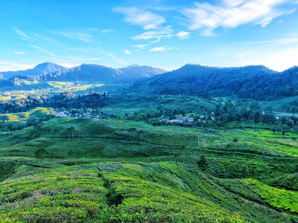 Tempat Wisata Di Bogor bertemakan alam di Kebun teh puncak berlatar pegunungan