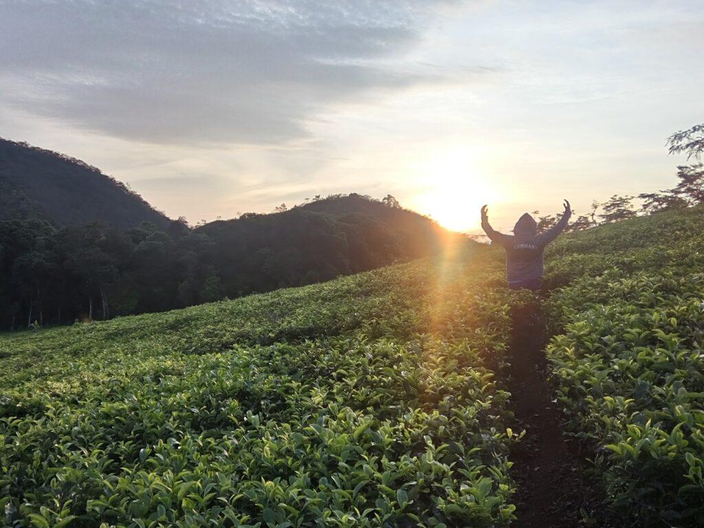 Berfoto ria di area kebun teh
