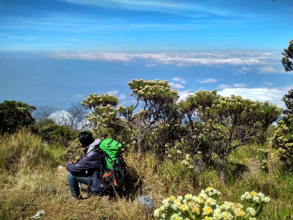 Beristirahat di antara hamparan edelweiss sebelum ke puncak