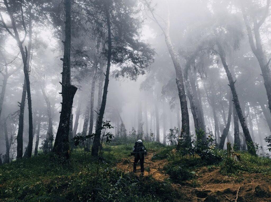 Pendaki memasuki kawasan hutan pinus