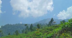 Area perbukitan kebun teh medini