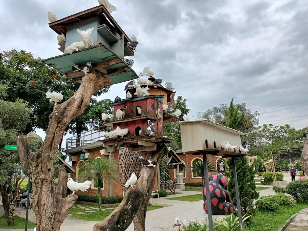 Koleksi burung di taman burung River Walk Boja