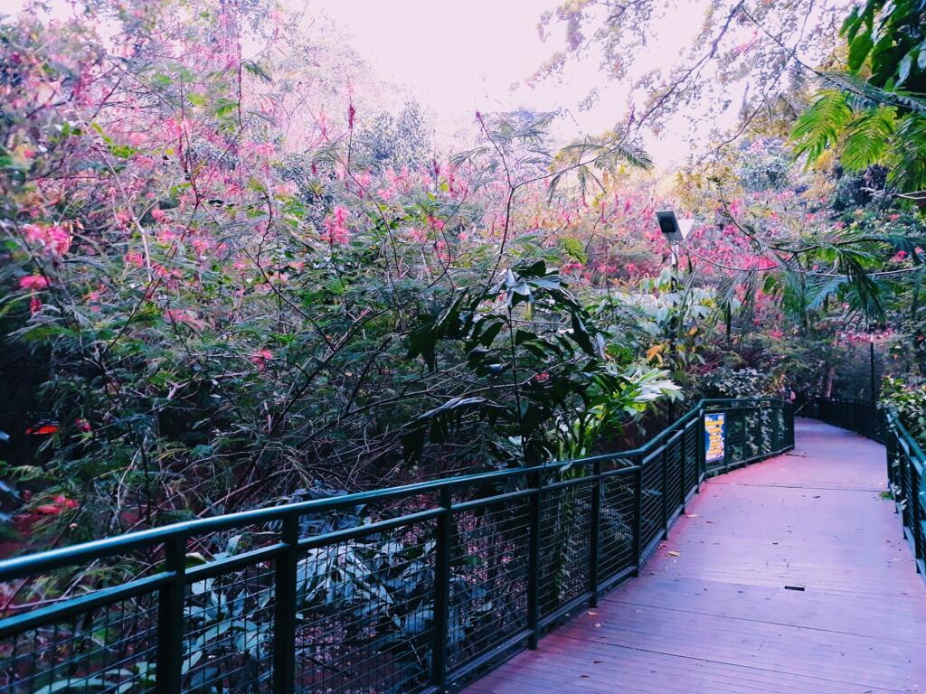 Sejuknya pepohonan di Forest Walk Babakan Siliwangi