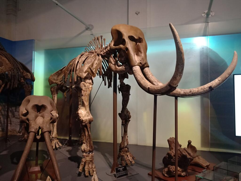 Museum geologi Tempat wisata di Bandung yang menyimpan koleksi kerangka hewan