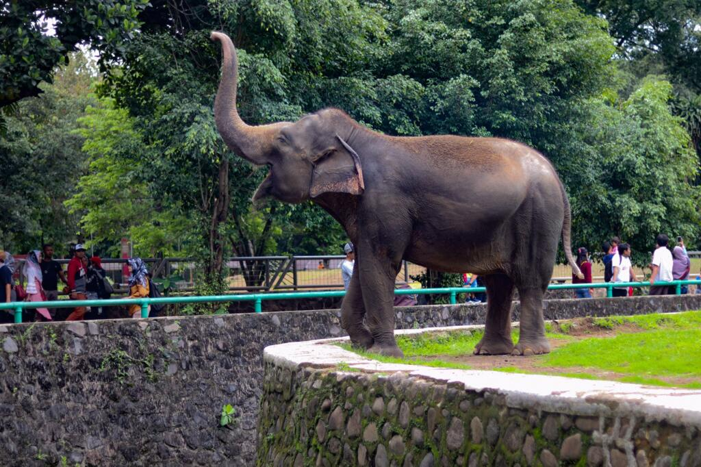 Kebun Binatang Ragunan tempat wisata di Jakarta dengan koleksi puluhan satwa