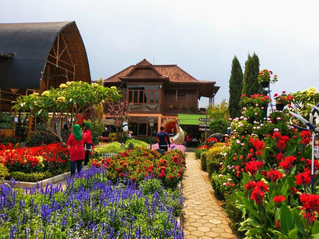 Kebun Begonia