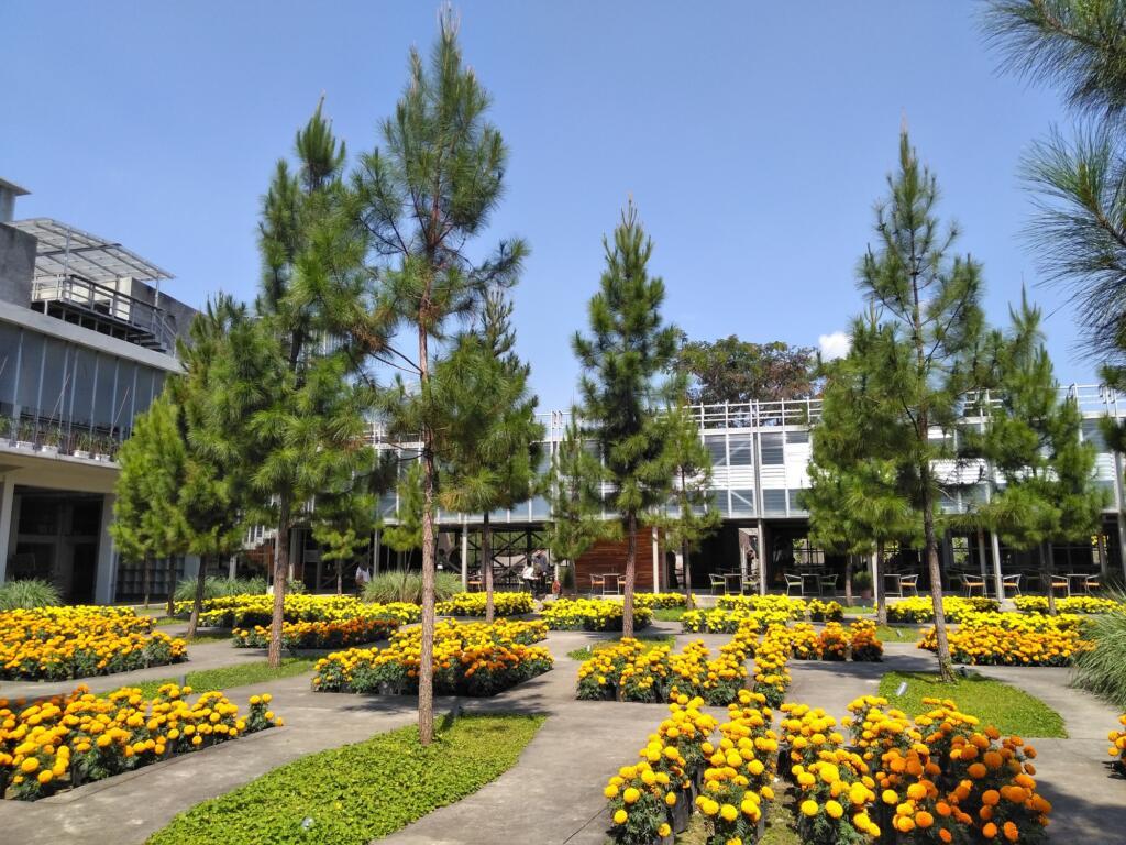 Indahnya Plaza Marigold di Rumah Atsiri