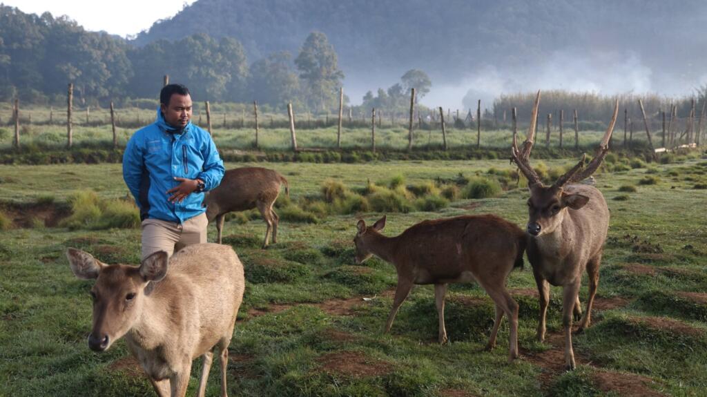 Tempat wisata di Bandung yang menawarkan berinteraksi dengan Rusa di Ranca Upas Ciwidey