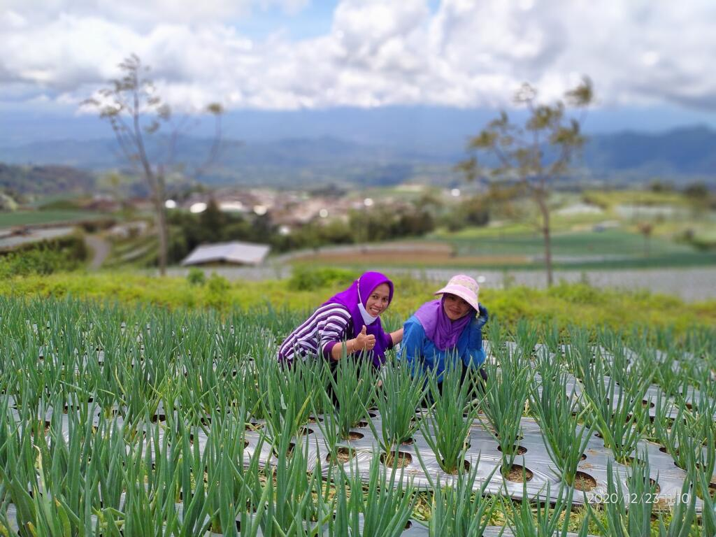Mencoba Berkebun dengan para petani