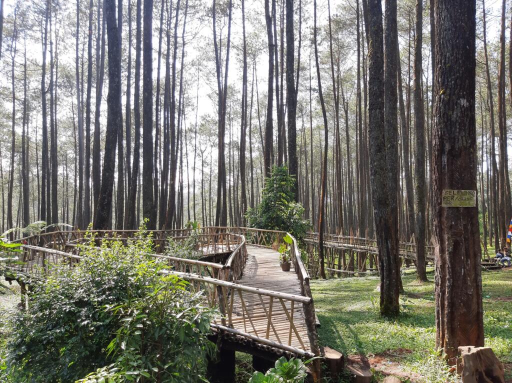 Hutan Pinus Cikole tempat wisata di Bandung berhawa sejuk