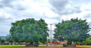 2 pohon beringin tepat berada di tengah alun-alun Banyumas