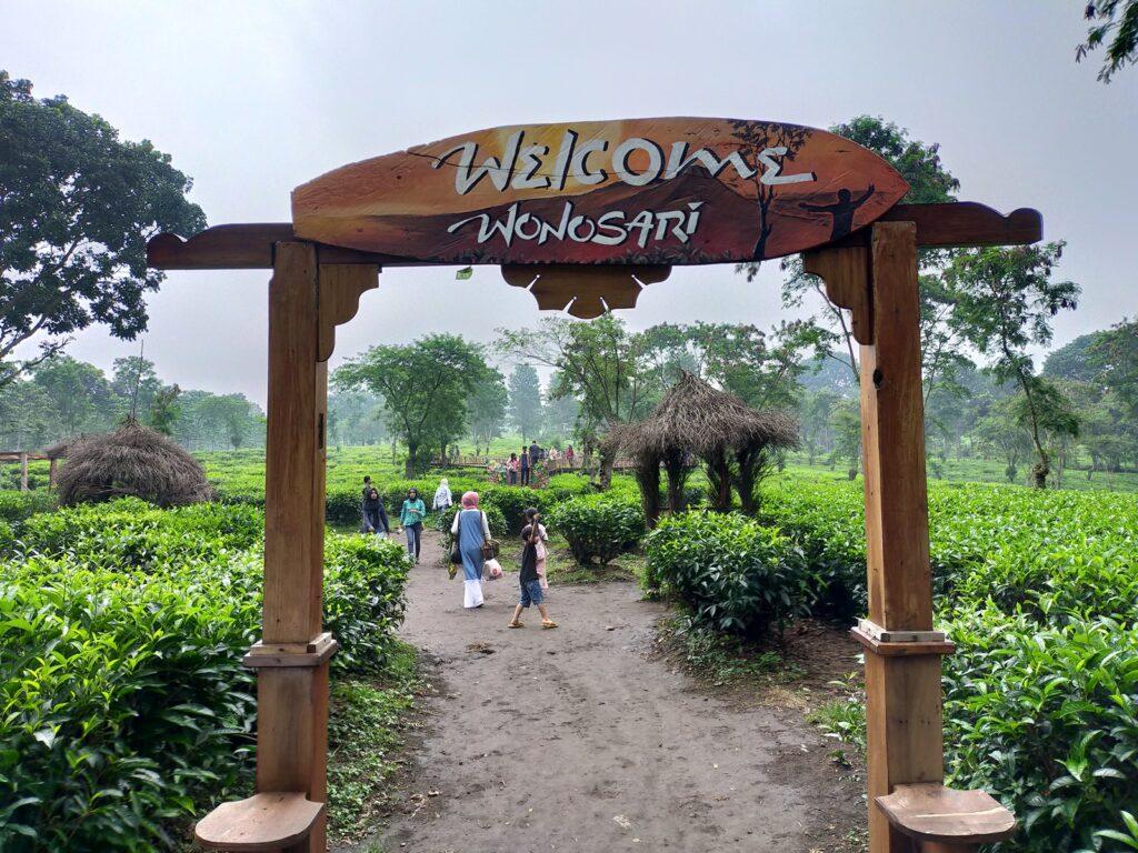 Kebun Teh Wonosari tempat wisata di Malang yang masih sejuk asri