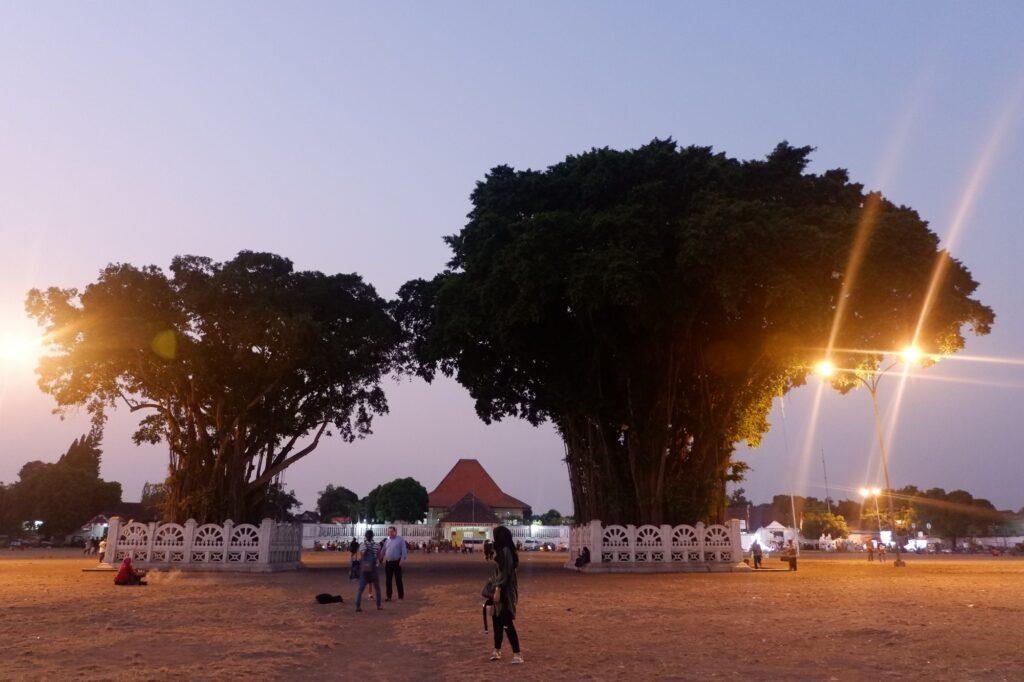 Pohon beringin di Alun-Alun Kidul Tempat wisata di Jogja berada di tengah kota