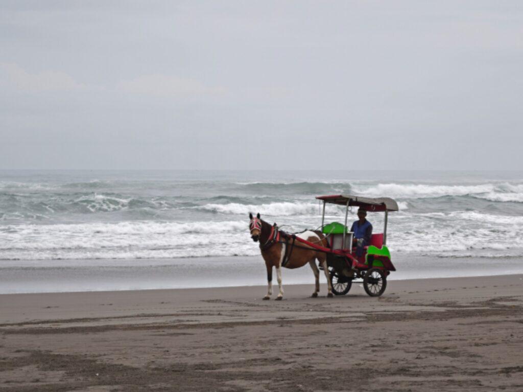 Delman di Pantai Parangtritis