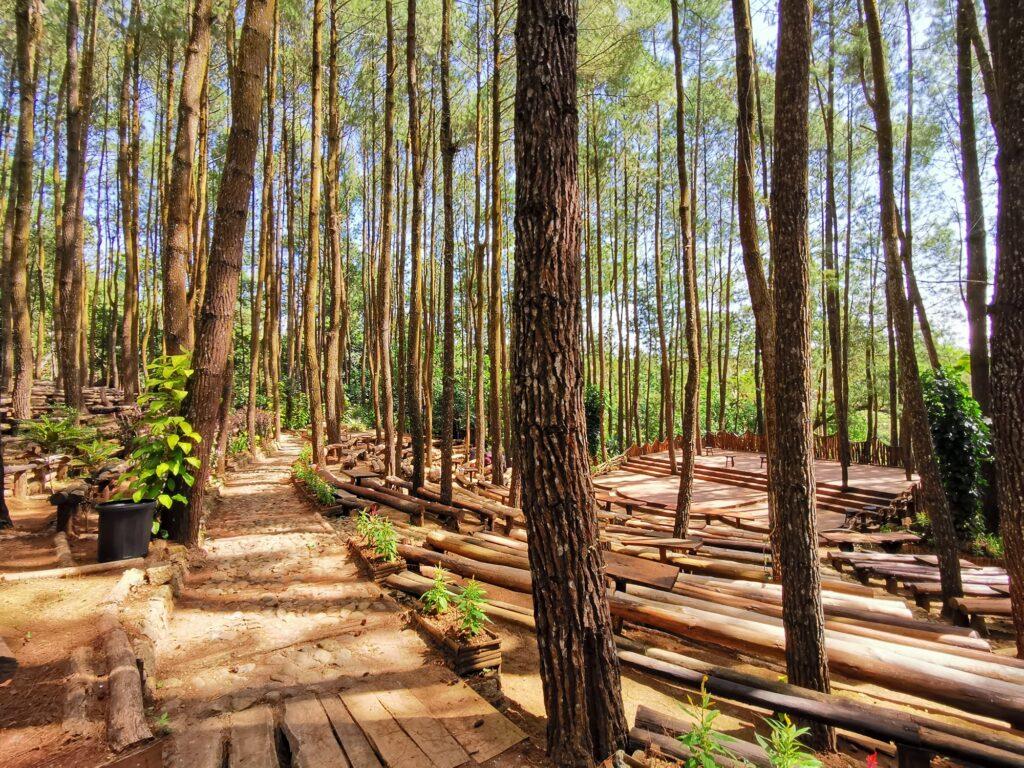 Hutan Pinus Mangunan Tempat wisata di Jogja bertemakan hutan pinus