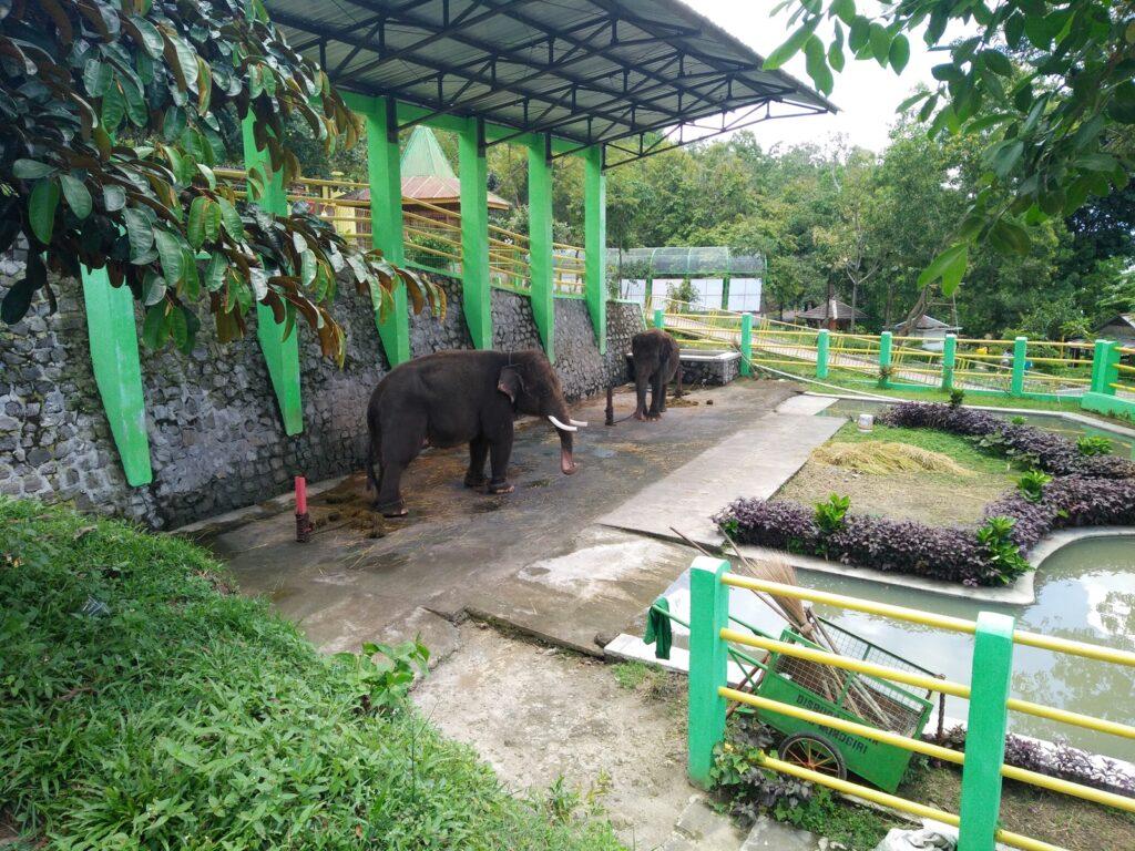 Gajah-gajah di Taman Satwa
