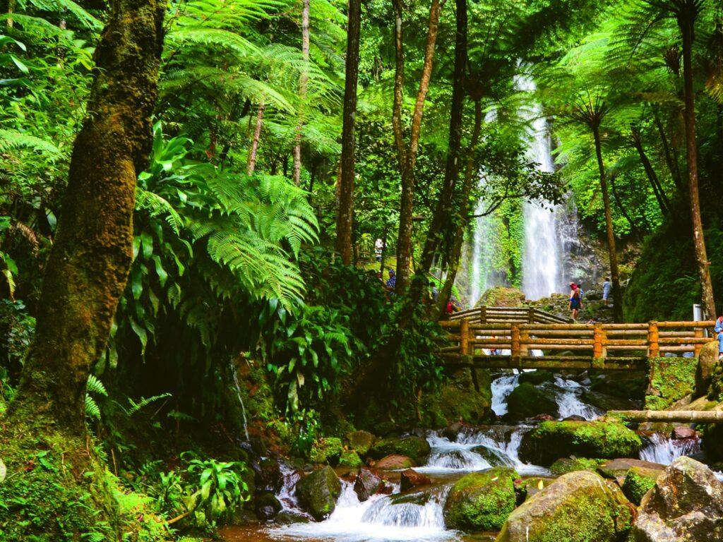 Air Terjun Jumog di balik rimbunnya hutan
