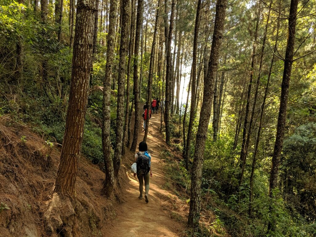 Menyusuri jalur hutan Gunung Andong
