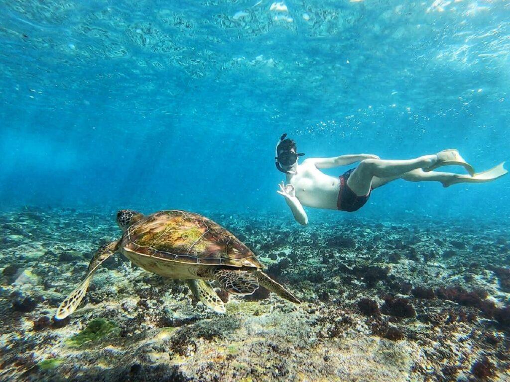 Menyelam Berenang dengan penyu di Crystal Bay Nusa Penida
