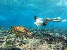 Menyelam Berenang dengan Hewan Bawah Air