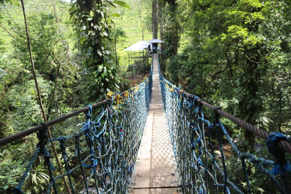 Jembatan gantung di Canopy Trail