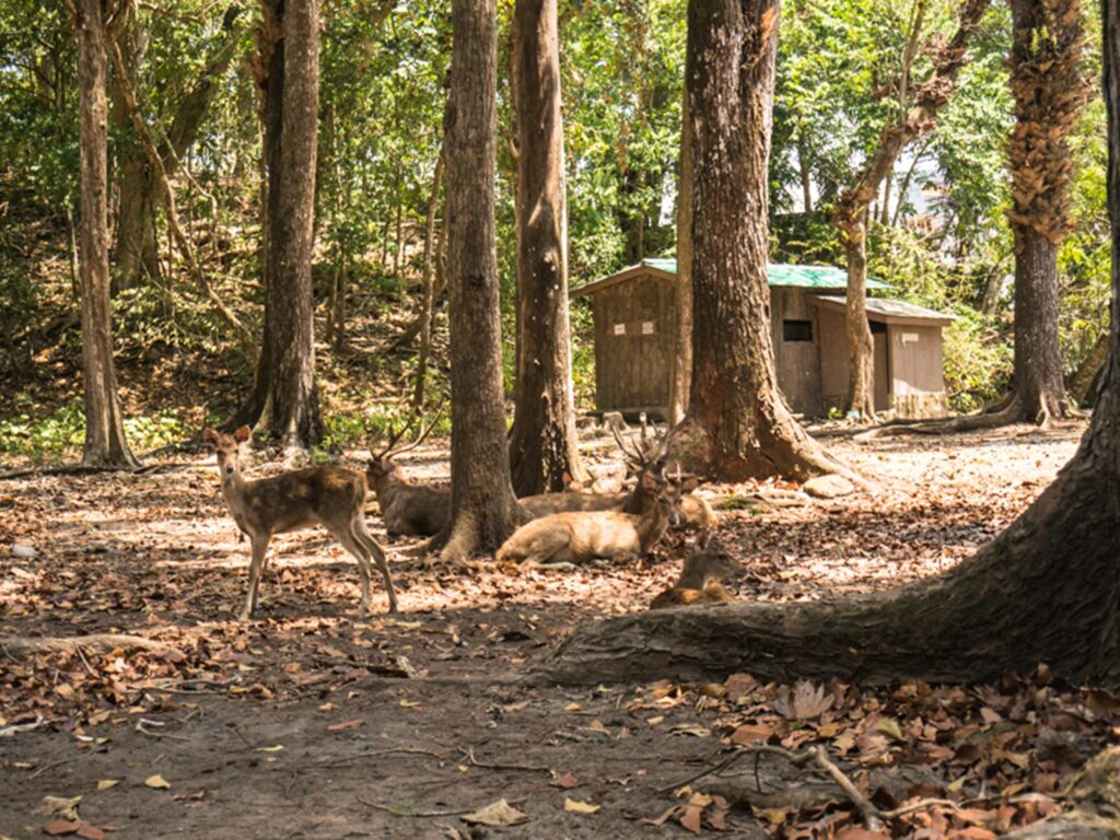 Kawanan rusa di hutan
