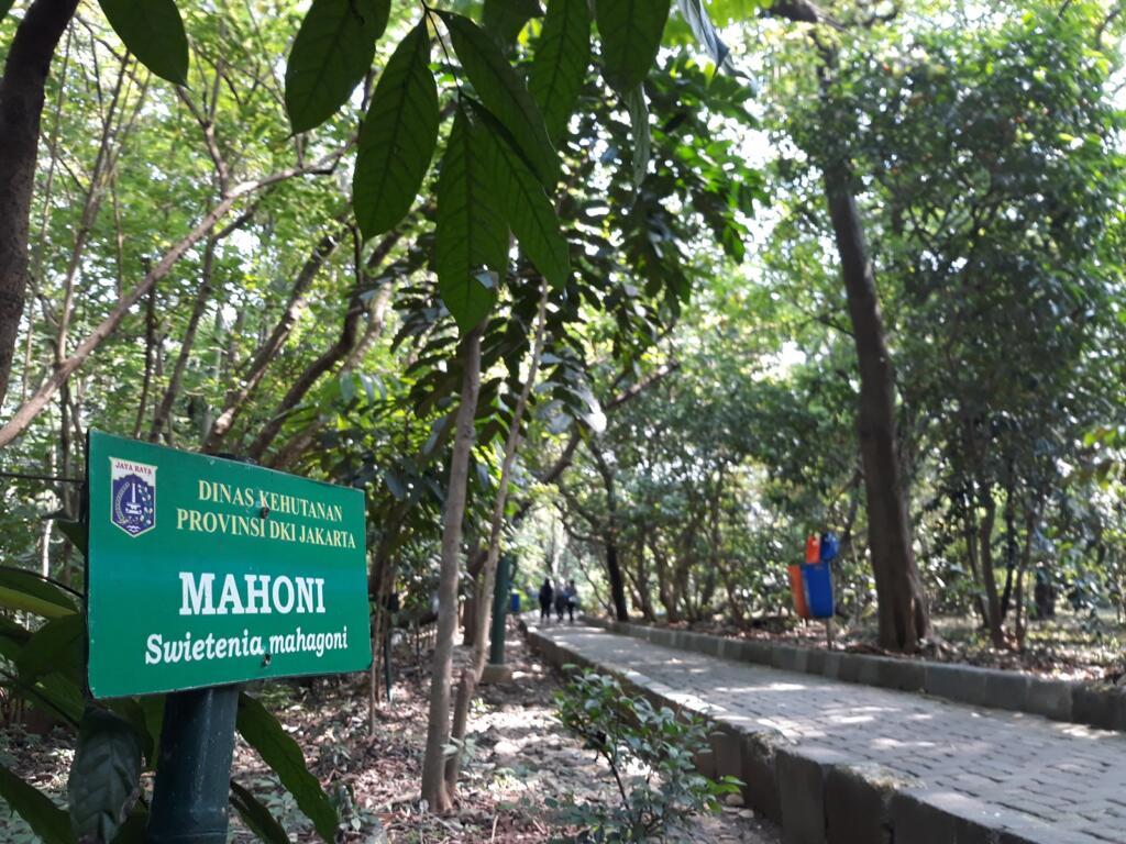 Papan nama Pohon Mahoni
