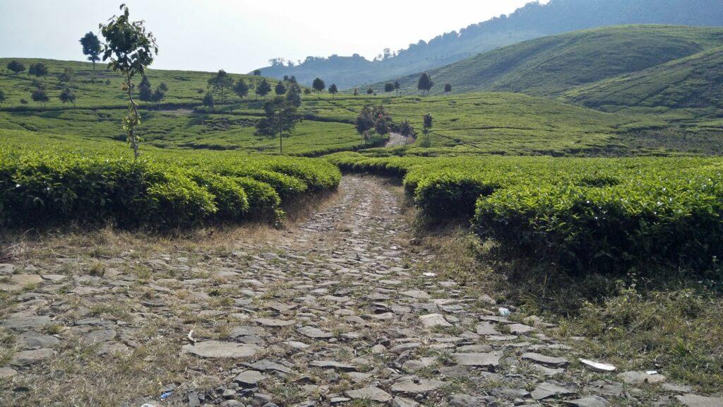 Jalan makadam yang melintasi perkebunan teh nan asri
