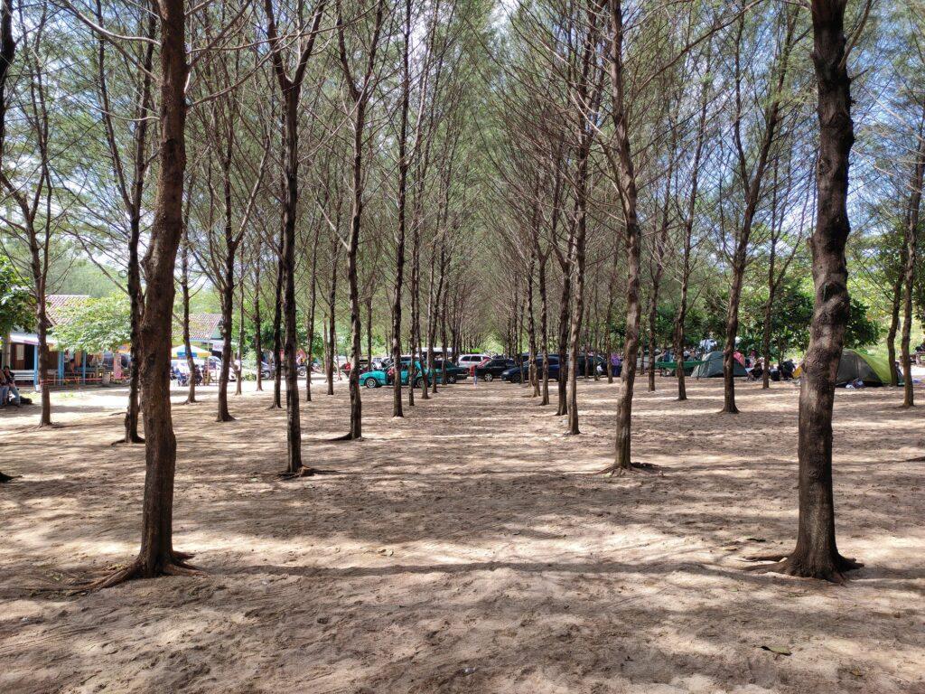 Hutan Cemara tempat Bersepeda