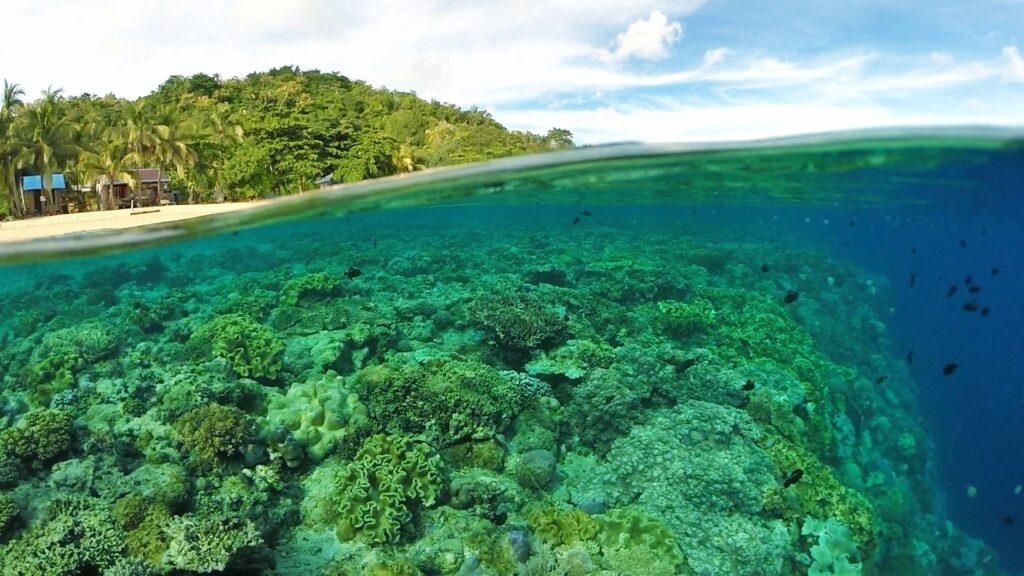 Pemandangan bawah laut Pulau Hatta