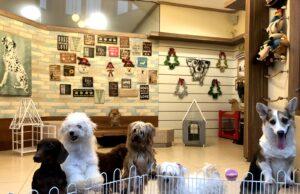 Beberapa jenis anjing yang ada di RUmah Guguk