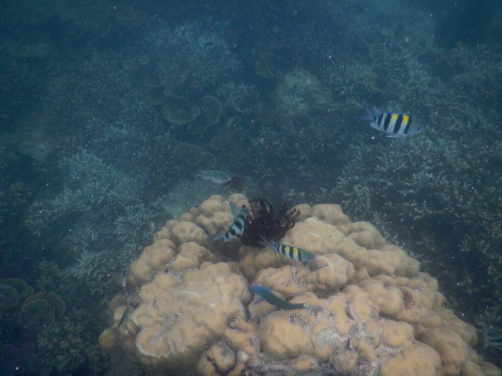 Ikan-ikan yang dijumpai ketika Menyelam
