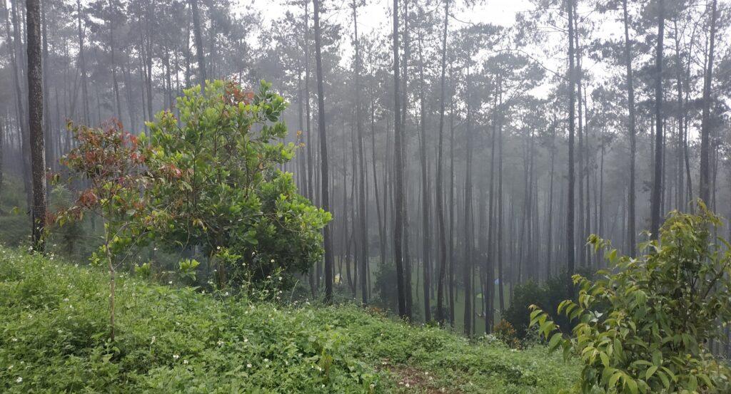 Kawasan Pohon Kabut yang Misterius