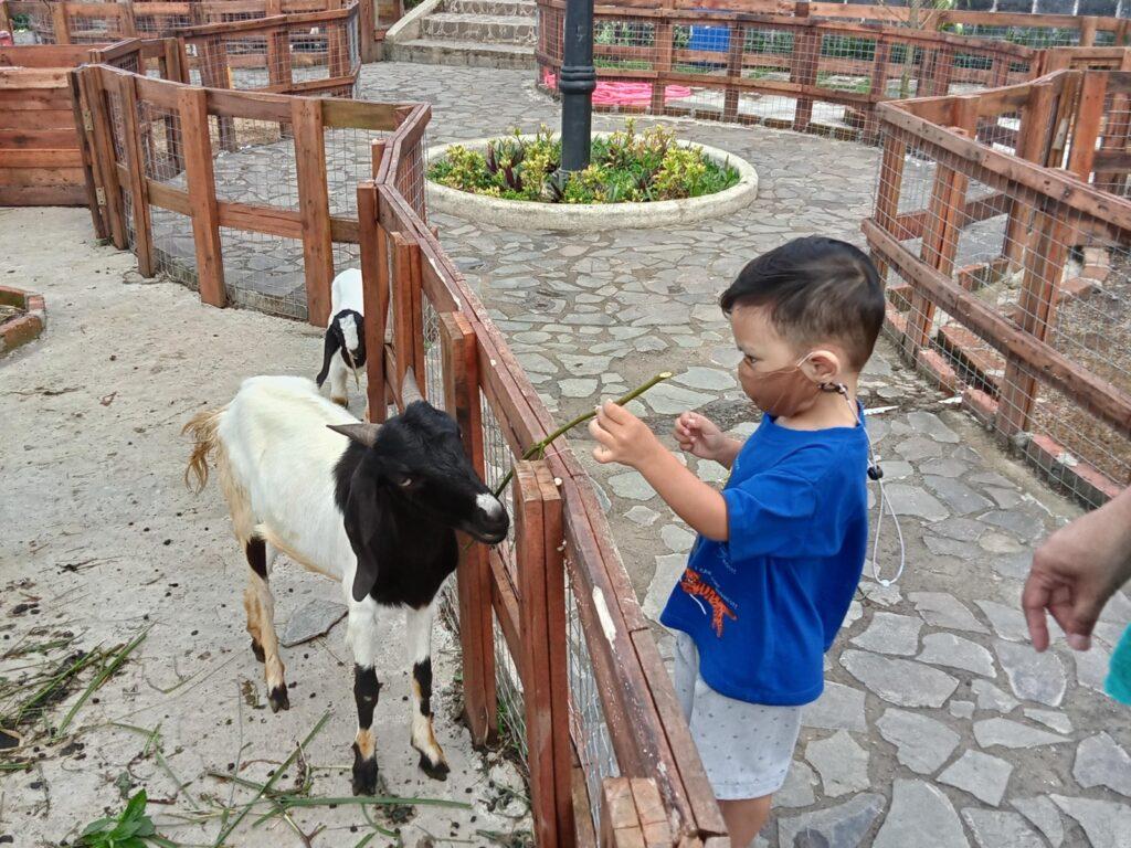 Pengunjung anak-anak memberi makan kambing di TAman Fathan Alesano