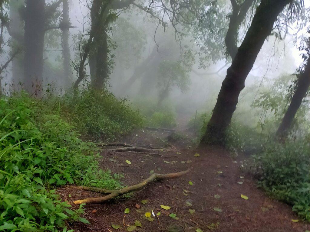 Kabut menyelimuti hutan Gunung Abang