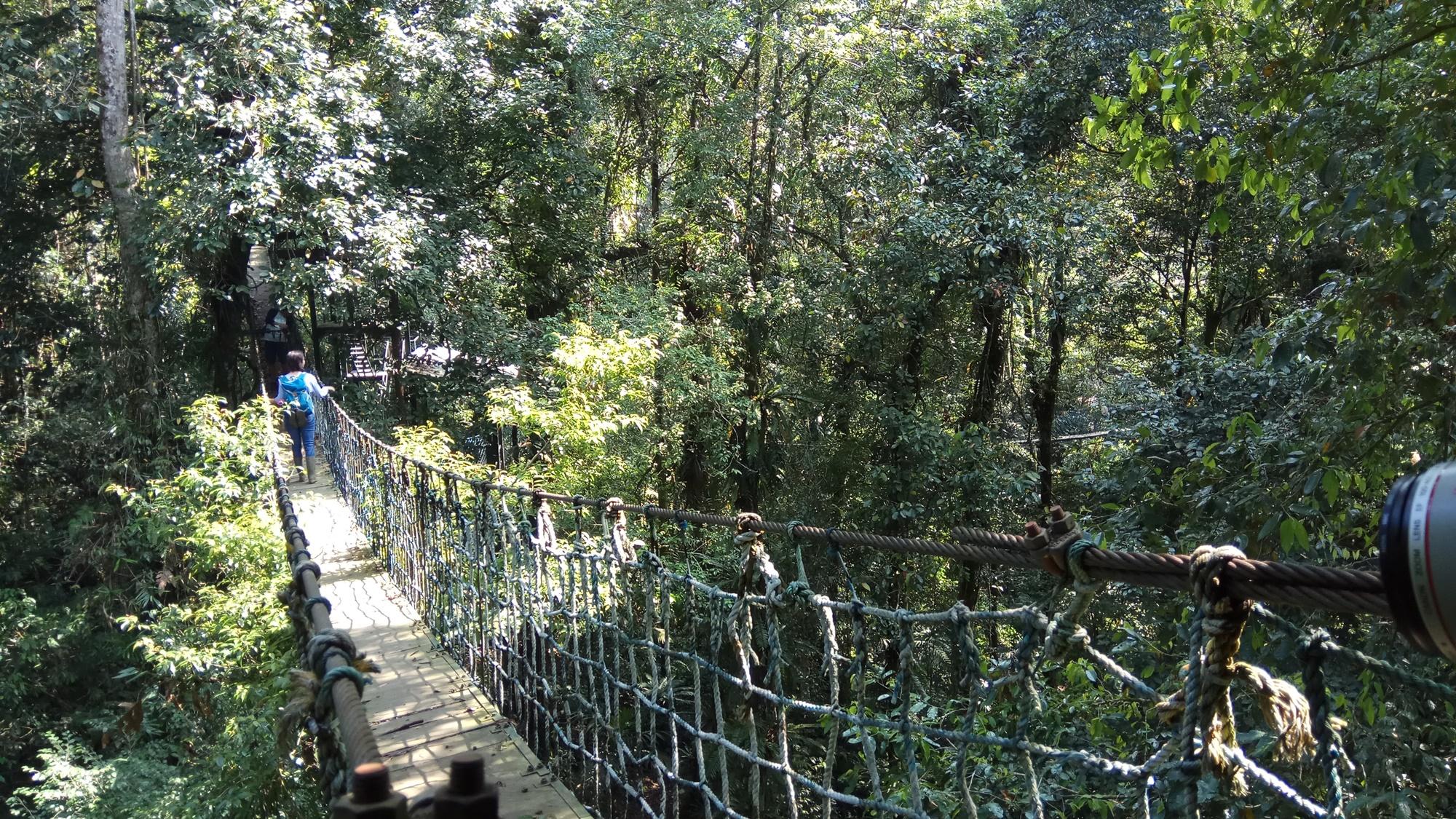 Jembatan gantung pusat penelitian Cikaniki